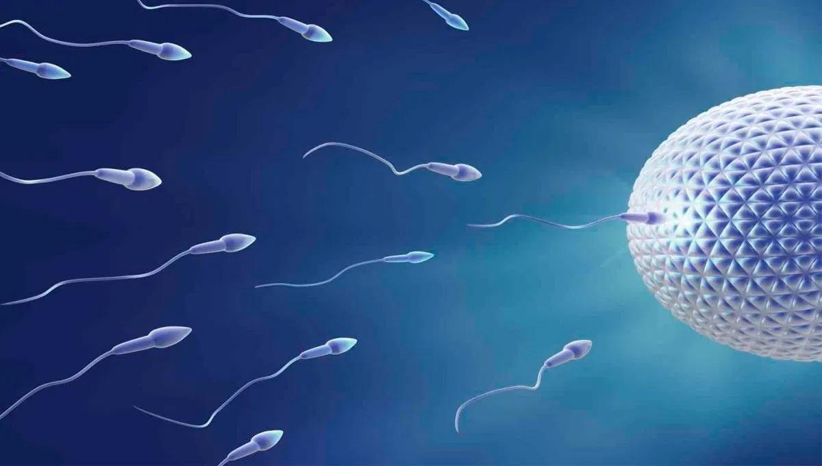 spermatozoi verso ovulo
